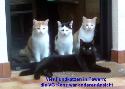 Die vier Tawerner Fundkatzen